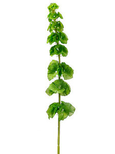 Image Is Loading 29 034 Artificial Bells Of Ireland Spray Green