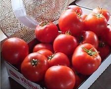 Mountain Merit Tomato Seed