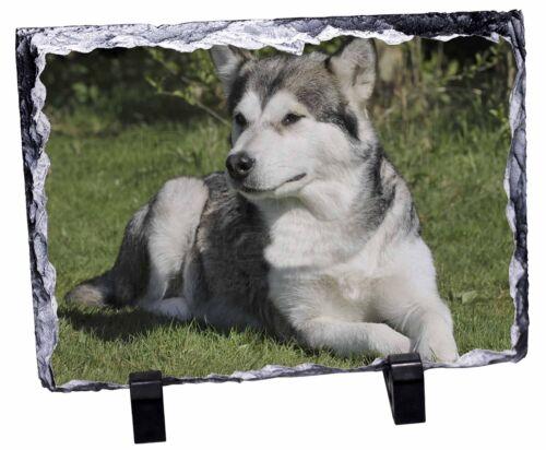 Alaskan Malamute Dog Photo Slate Christmas Gift Ornament AD-AM1SL