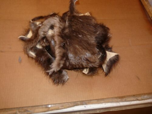 LOT of tanned BEAVER  scrap pieces fur pelt skin FLY TYING smaller native craft