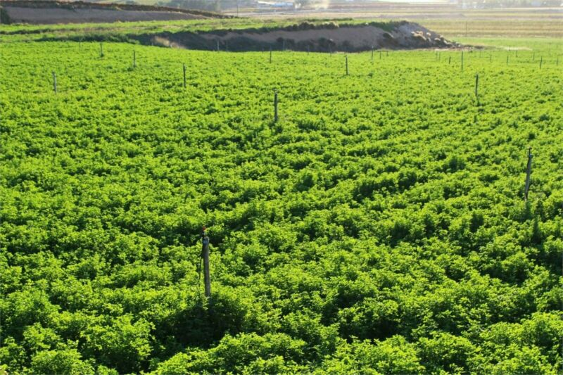 VREDENDAL: Quality lucerne farm with infrastructure