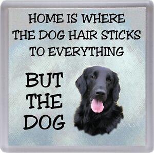 "Labrador Black Coaster /""Home is Where the Dog Hair Sticks .../"" by Starprint"