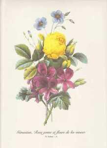 Geranium-Gelbe-Rosen-Blauer-Lein-Blumenstrauss-FAKSIMILE-Farbdruck-Redoute