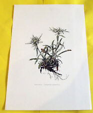 PLANCHE PÉDAGOGIQUE EDELWEISS N°152. (FL1)