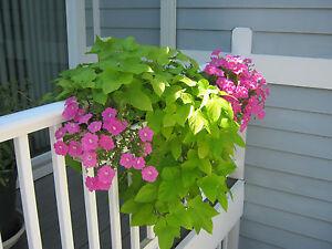 Details about Deck Porch or Balcony railing planters 24
