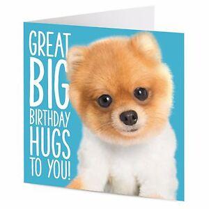 Great Big Birthday Hugs To You Super Cute Pomeranian Dog Birthday