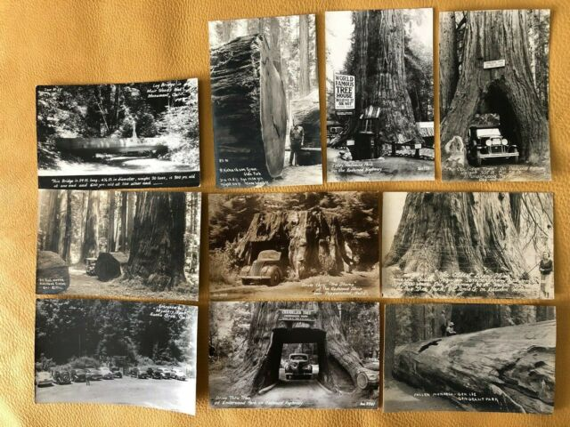 California Redwoods Redwood Highway Vintage RPPC Lot of 10 postcards - Old Autos