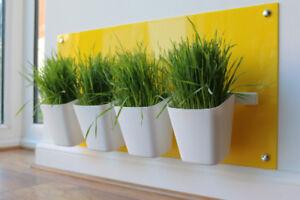 Station d'herbe de chat en jaune canari - Moderne, hygiénique de My Grass ™