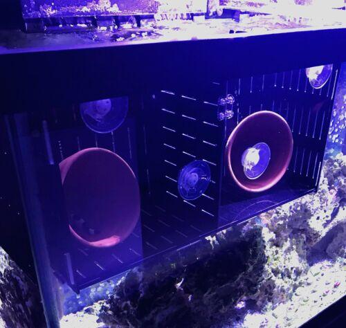 Clownfish Breeding Breeder Box Acrylic Acclimation Holding Net
