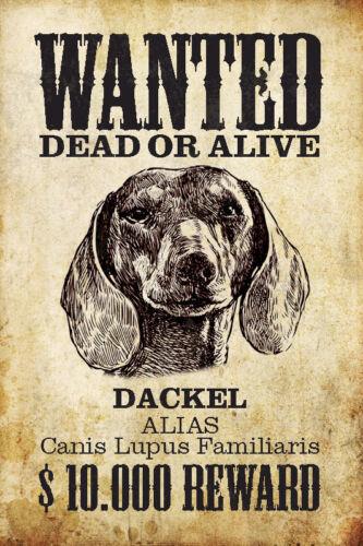 Wanted Hund Dackel Blechschild Metallschild Schild gewölbt Tin Sign 20 x 30 cm