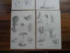 Antique-prints-19th-century-Victorian-era-prints-of-leaves-plants-Decoupage