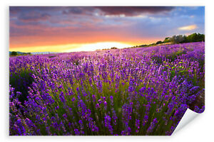 Postereck-Poster-0545-Lavendelfeld-Sonnenuntergang-lila-Blumen-Sonne