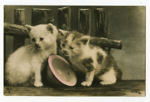 c-1911-British-Cute-Kitten-LITTLE-CATS-photo-postcard
