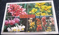 Portugal Madeira Orchids in Quinta da Boa Vista - posted 1998