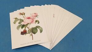 20-x-NEW-Flowers-Postcards-1-Design-for-Postcrossing-amp-Postcardsofkindness