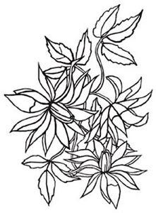 4.25 x 5.75 Darice Embossing Folder LOOSE FLORA Flower Card Making 1218-51