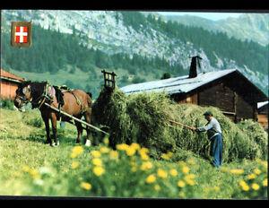 En-SAVOIE-73-AGRICULTEUR-en-FENAISON-en-1985-200-ANS-ASCENSION-du-MONT-BLANC