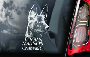 Belgian Malinois on Board - Car Window Sticker - Mechelse Dog Sign Decal - V01