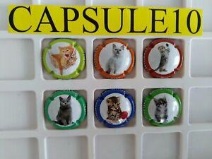 NEWS-CAPSULE-DE-CHAMPAGNE-Dumont-les-chats