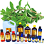 3ml-Essential-Oils-Many-Different-Oils-To-Choose-From-Buy-3-Get-1-Free thumbnail 64