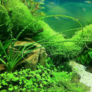 1000pcs-Aquarium-Tank-Mixed-Grass-Seed-Water-Aquatic-Plant-Seeds-Decorations