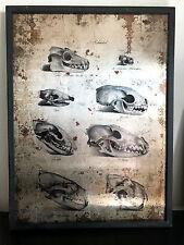 Cabinet de Curiosités Cadre cranes effet metal rouillé 60x80 cm!!