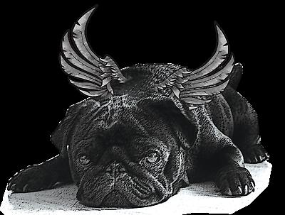 ab62 Französische Bulldogge Hund Mops Aufnäher Bügelbild Applikation 7,6 x 6,6cm