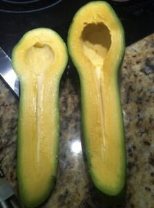 Two-GRAFTED-Tropical-Fruit-AVOCADO-Live-Tree-Guiro-Variety-2-3-OFFER