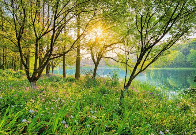 Wall Mural Spring Lake Green Forest Photo Wallpaper Large Art Wild Nature