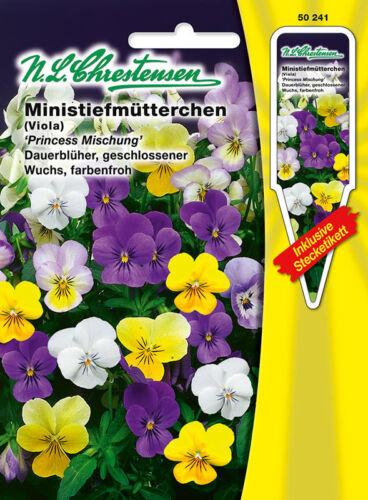 Ministiefmütterchen /'Princess Mischung/' Viola cornuta Hornveilchen  50241
