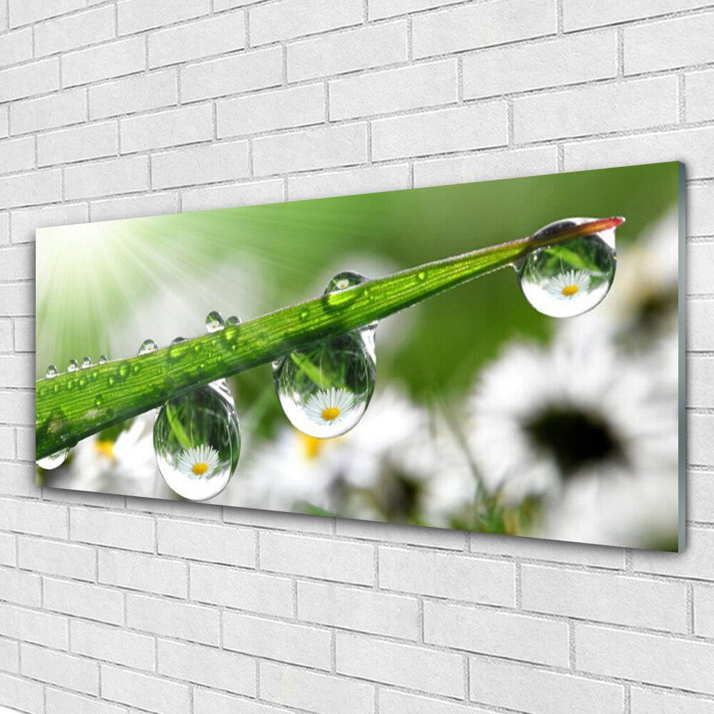 Acrylglasbilder Wandbilder aus Plexiglas® 125x50 Gras Tautropfen Natur