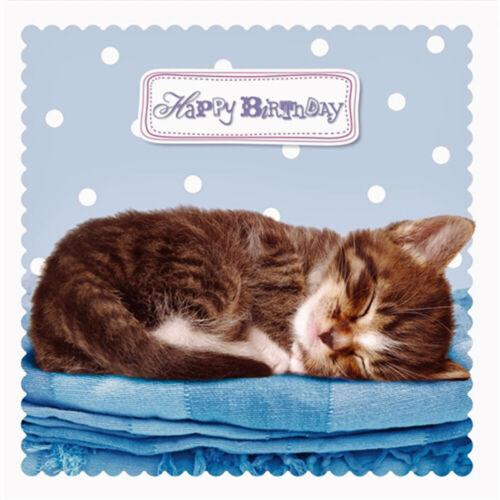Kitten Birthday Card Sleeping Kitty Blue Blanket Cute Cat Lovers Greeting Card