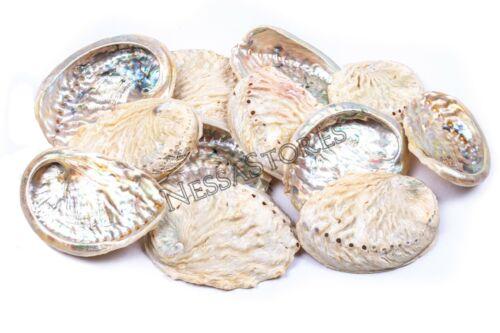 "#JC-154 12 pcs Midae Abalone Sea Shell One Side Polished Beach Craft 3/"" 4/"""