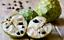 Custard-apple-Live-Exotic-Fruit-Tree miniature 2
