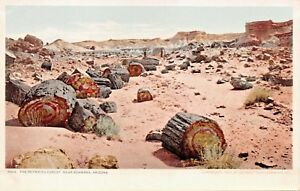 ADAMANA-NEW-MEXICO-THE-PETRIFIED-FOREST-POSTCARD-1900s