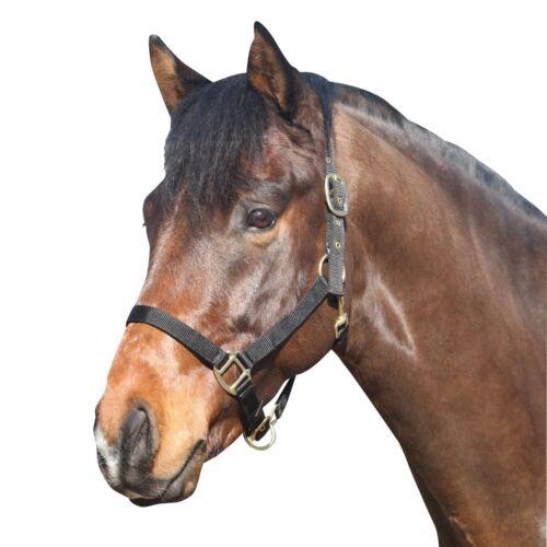 Pony Ponyhalfter Halfter für Ponys ELDORADO Nylonhalfter schwarz