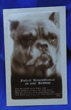 Old photo postcard Old English Bulldog Bully dog Pitbull Staffordshire terrier
