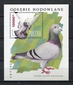 36125) Poland 1994 MNH Pigeon S/S Scott #3216