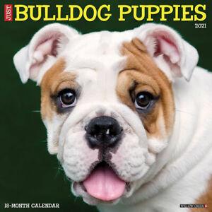 Just Border Terriers 2021 Wall Calendar dog breed calendar Free Shipping
