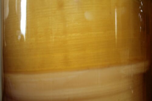 Raised on Raw Local Honey and Organic Green Tea 5 inch Authentic Jun Scoby