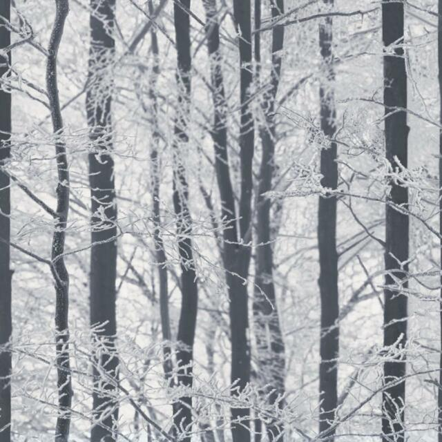 ARTHOUSE FROSTED WOOD FOREST PATTERN TREES WINTER GLITTER WALLPAPER