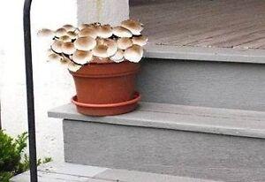 Zimmerpflanzen Ohne Licht italienische zimmerpflanze pioppino wächst ohne licht an dunklen