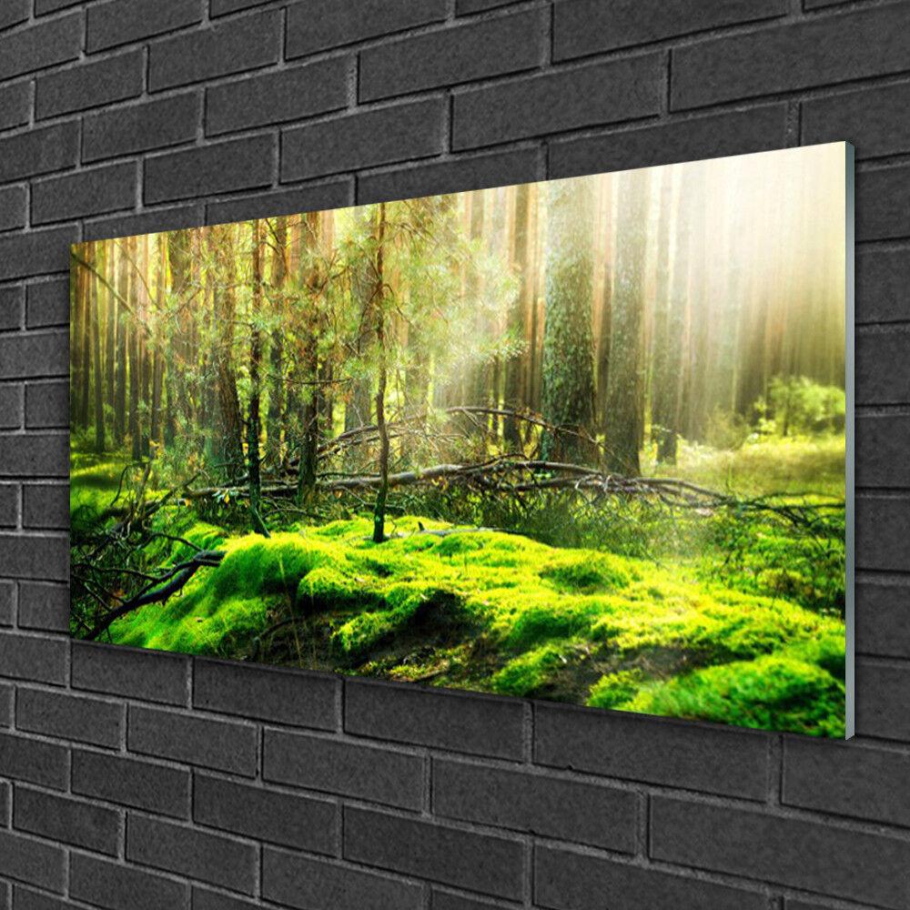 Tableau sur verre Image Impression 100x50 Nature Bryophyte Forêt