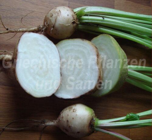 Rouge Betterave Albino Blanc Rarité 30 Graines