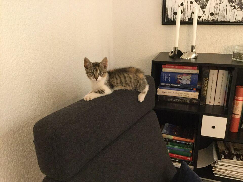 1 charmerende  kattekilling til salg
