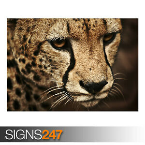 CHEETAH-AE917-Photo-Picture-Poster-Print-Art-A0-A1-A2-A3-A4