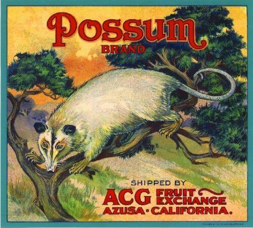 Azusa Los Angeles California Possum Orange Citrus Fruit Crate Label Art Print