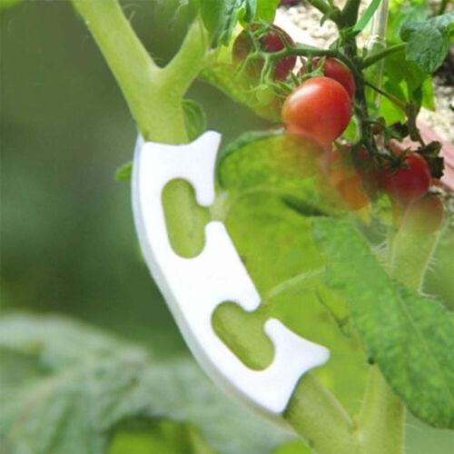 EG/_ 100PC TOMATO VEGGIE GARDEN PLANT SUPPORT CLIPS FOR TRELLIS TWINE GREENHOUSE
