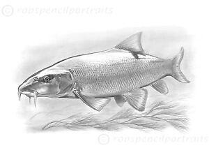 HEADS DOWN Underwater Carp Fishing Art Drawing Print Gift Present Carper Angler