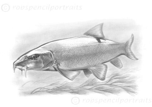 BARBEL Underwater Fishing Quality Gift Present For Barbel Angler Fisherman
